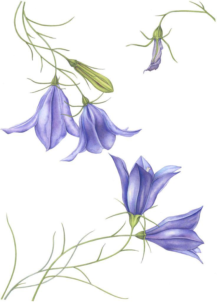 botanical watercolor painting tutorial