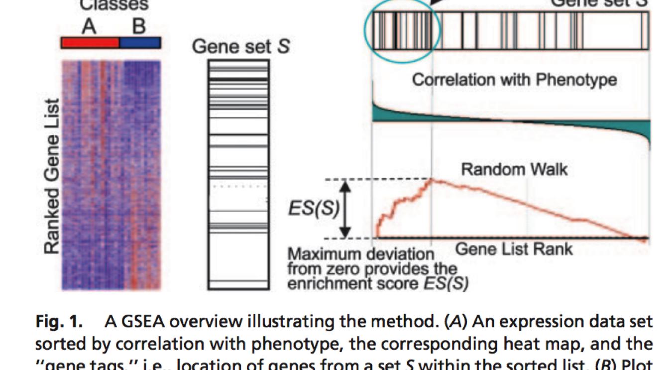 gene set enrichment analysis tutorial